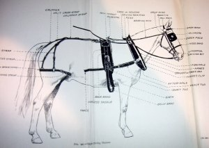 Parts of a draught horse harness from this classic veterinary  textbook for veterinary students and animal keepers