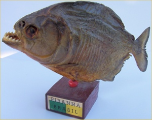 Unusual collectors 39 items gifts for the person who has for Skin eating fish